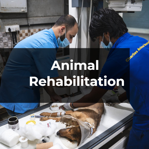 CARE Animal Rehabilitation